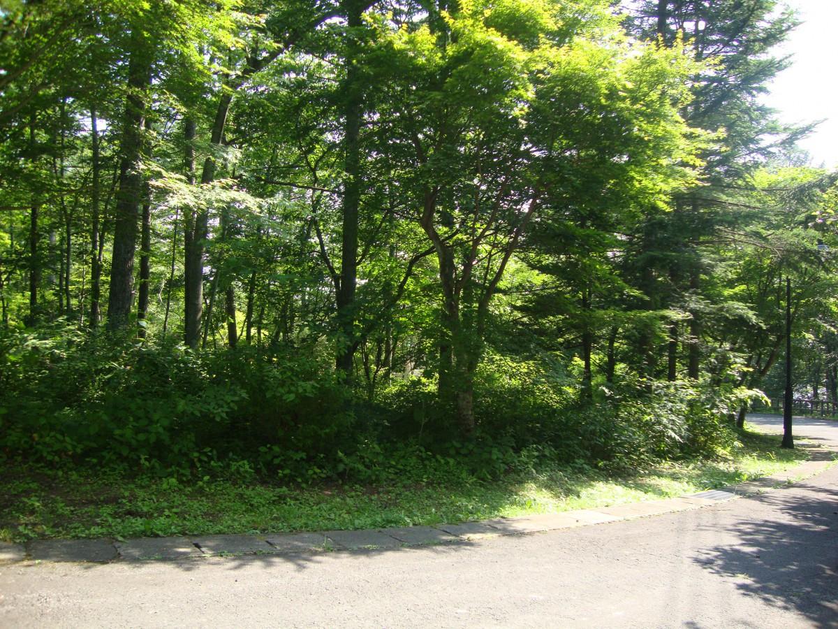 ブランシャールの森 区画45 - 0