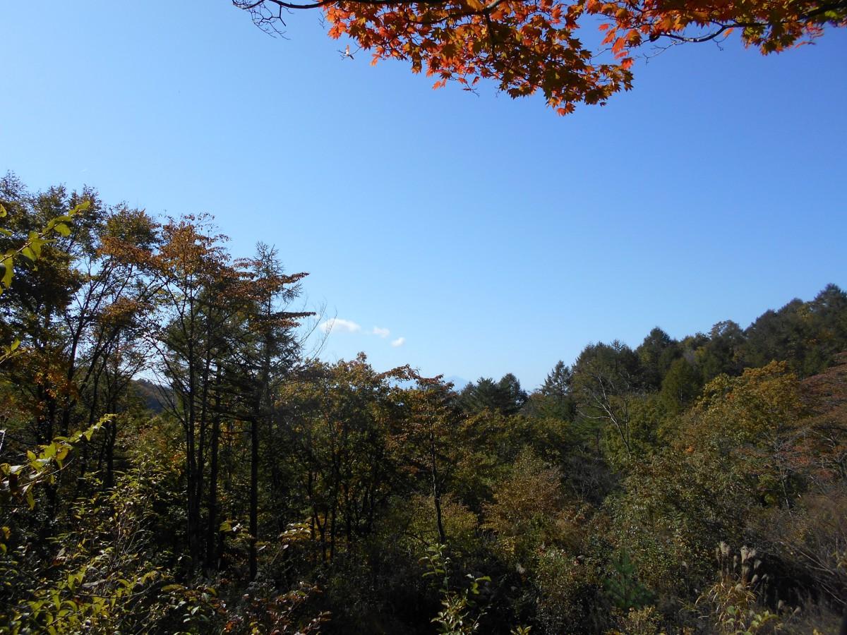 ブランシャールの森 区画28 - 6