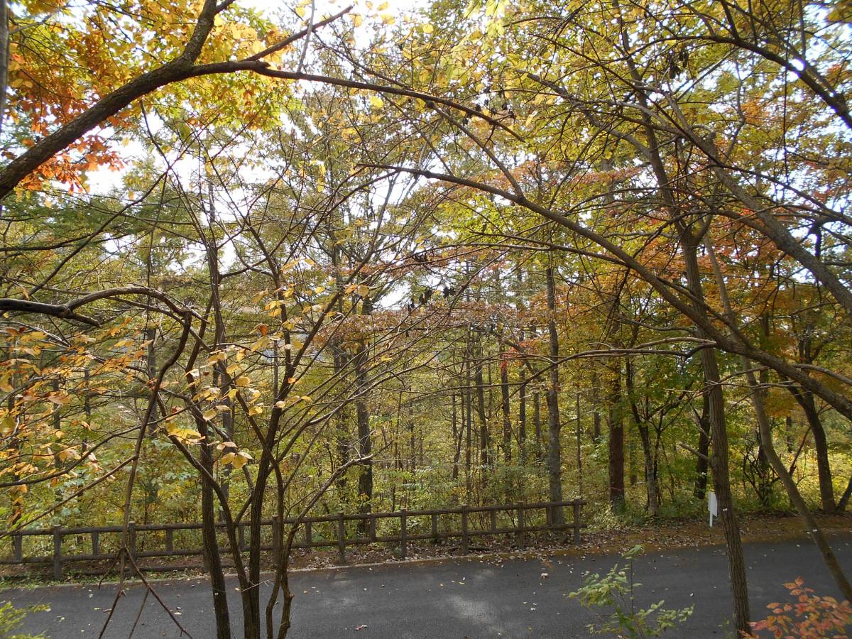 ブランシャールの森 区画8 - 0