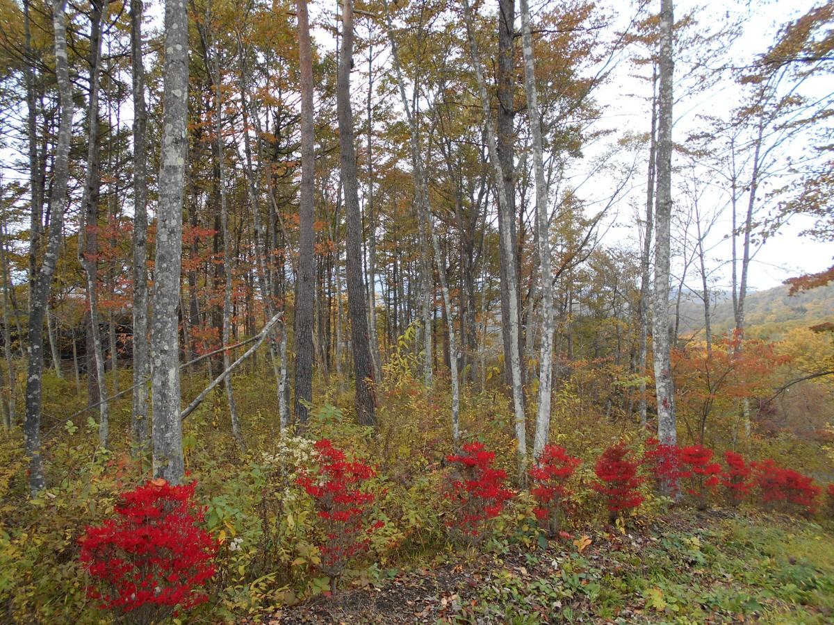 ブランシャールの森 区画8 - 4