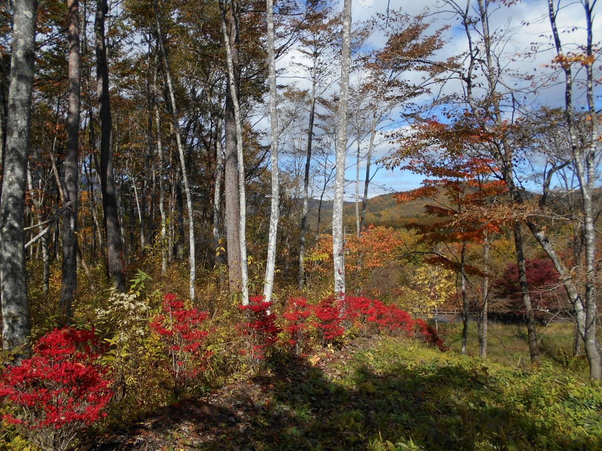 ブランシャールの森 区画8 - 2