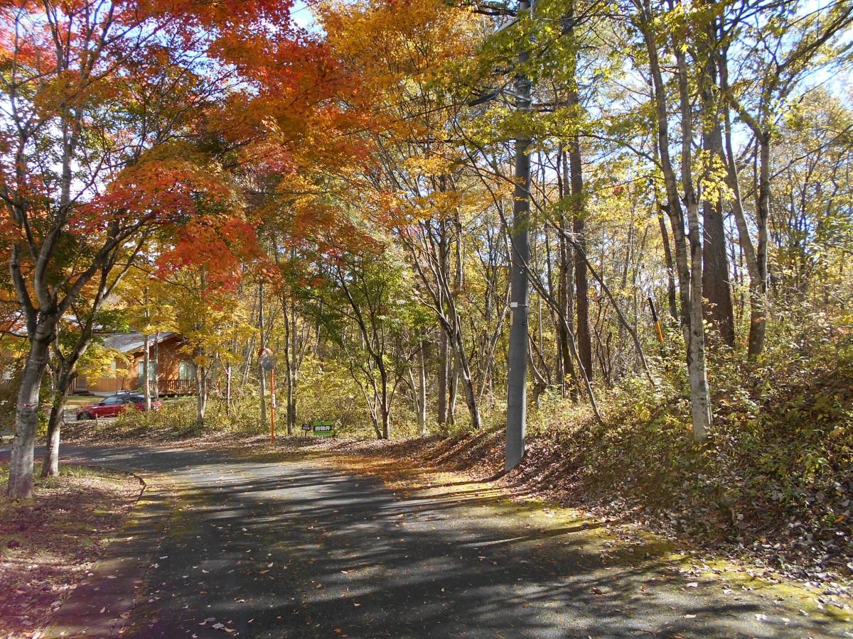 ブランシャールの森 区画21.22 離山を望む - 15