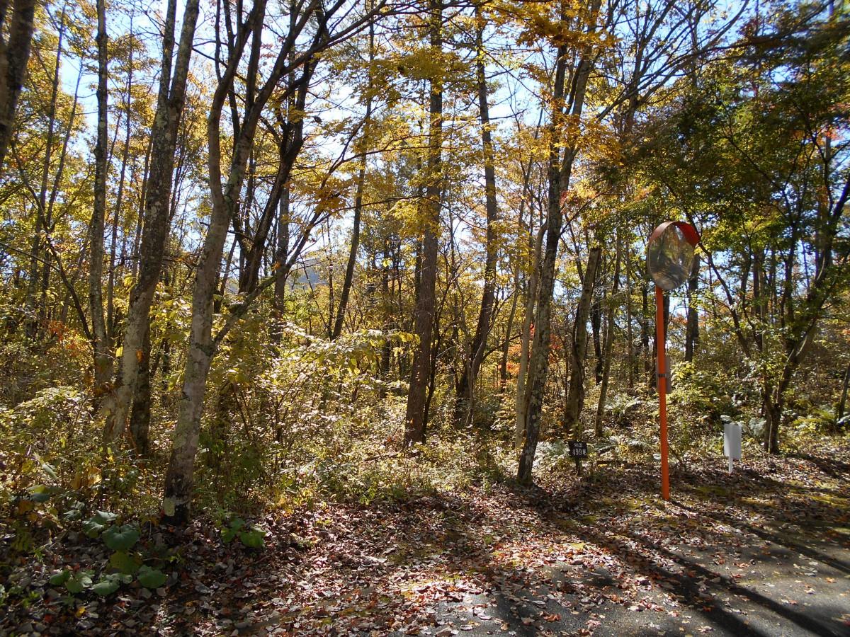 ブランシャールの森 区画21.22 離山を望む - 11