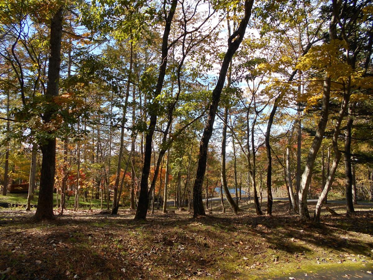 ブランシャールの森 区画45 - 3