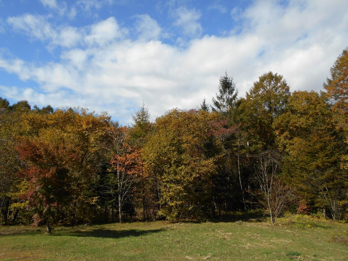 ブランシャールの森 区画2 - 4