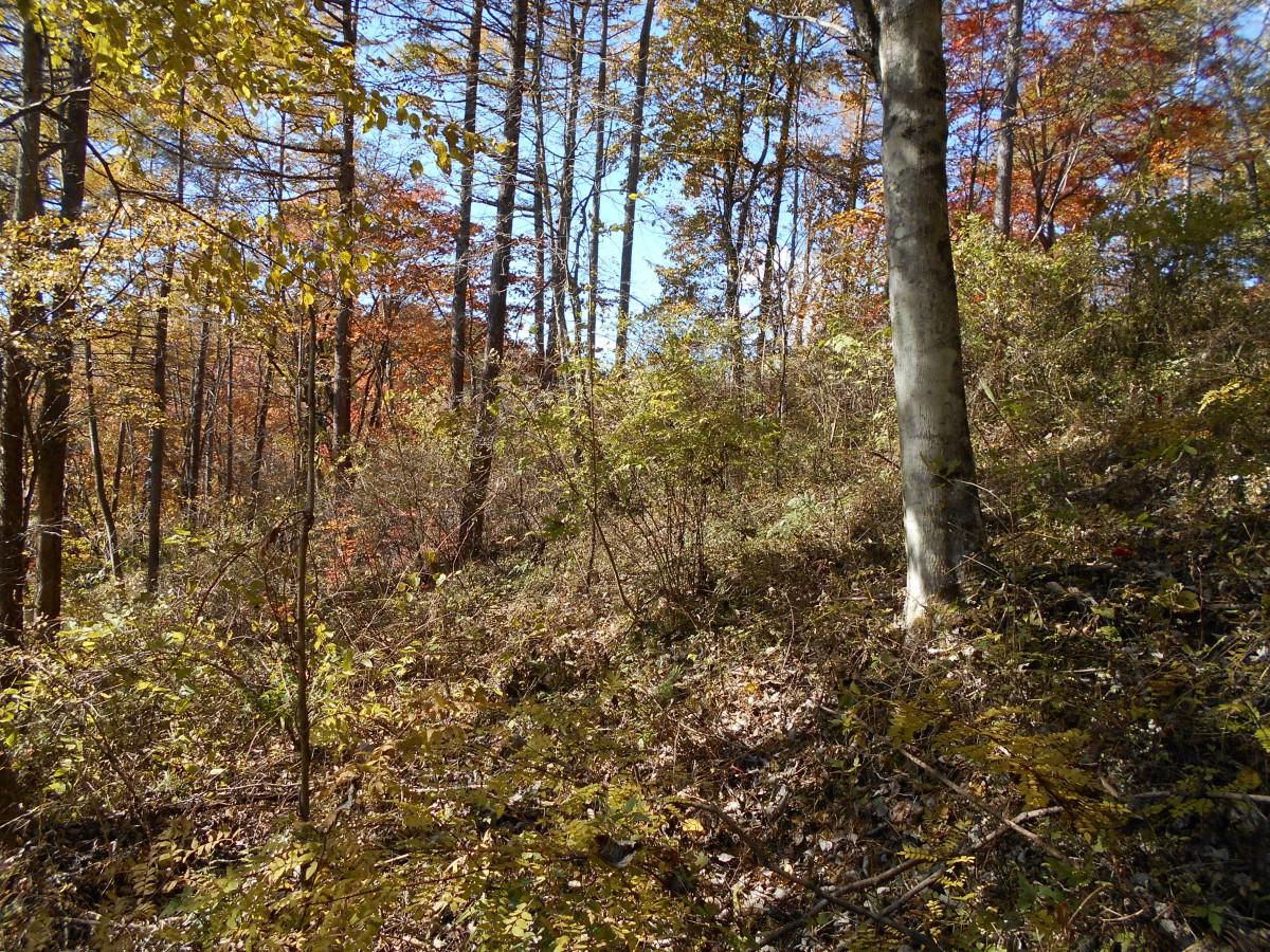 ブランシャールの森 区画28 - 4