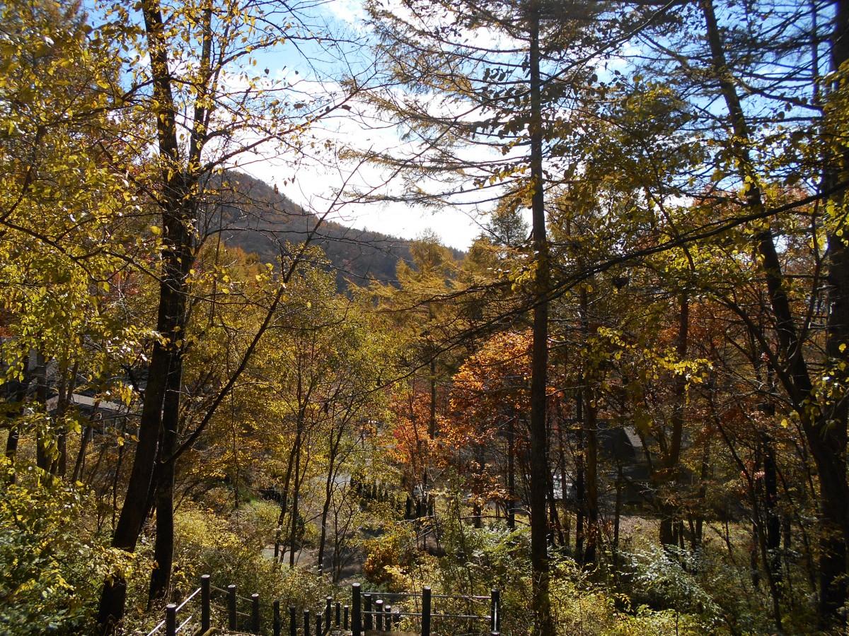 ブランシャールの森 区画28 - 5