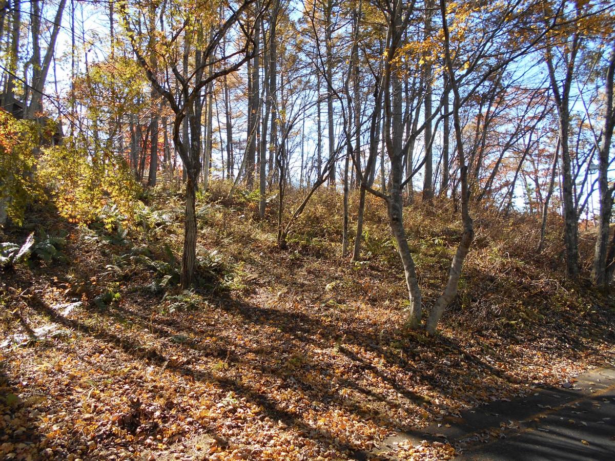 ブランシャールの森 区画7 - 1