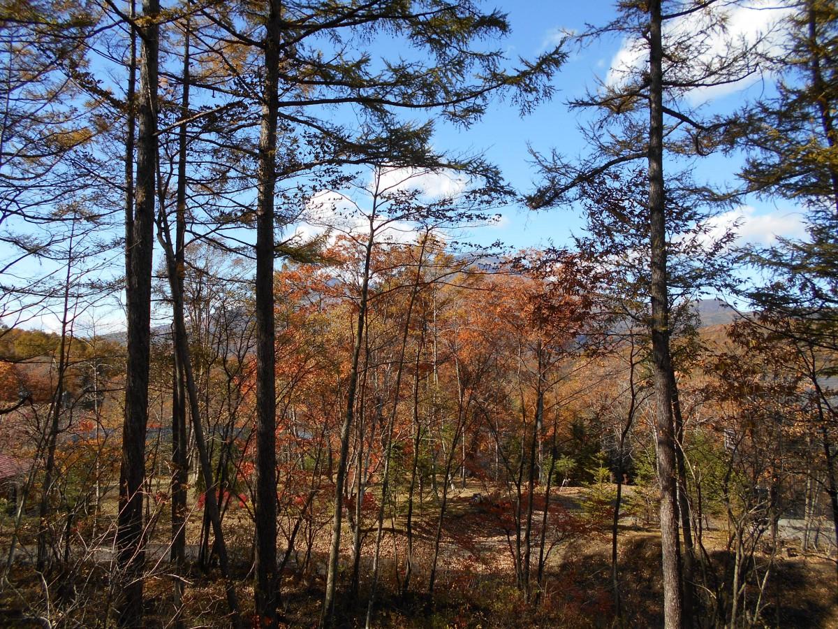 ブランシャールの森 区画7 - 2