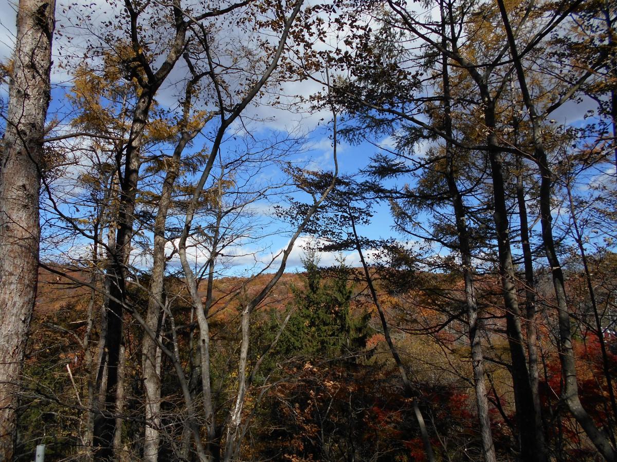 ブランシャールの森 区画7 - 3