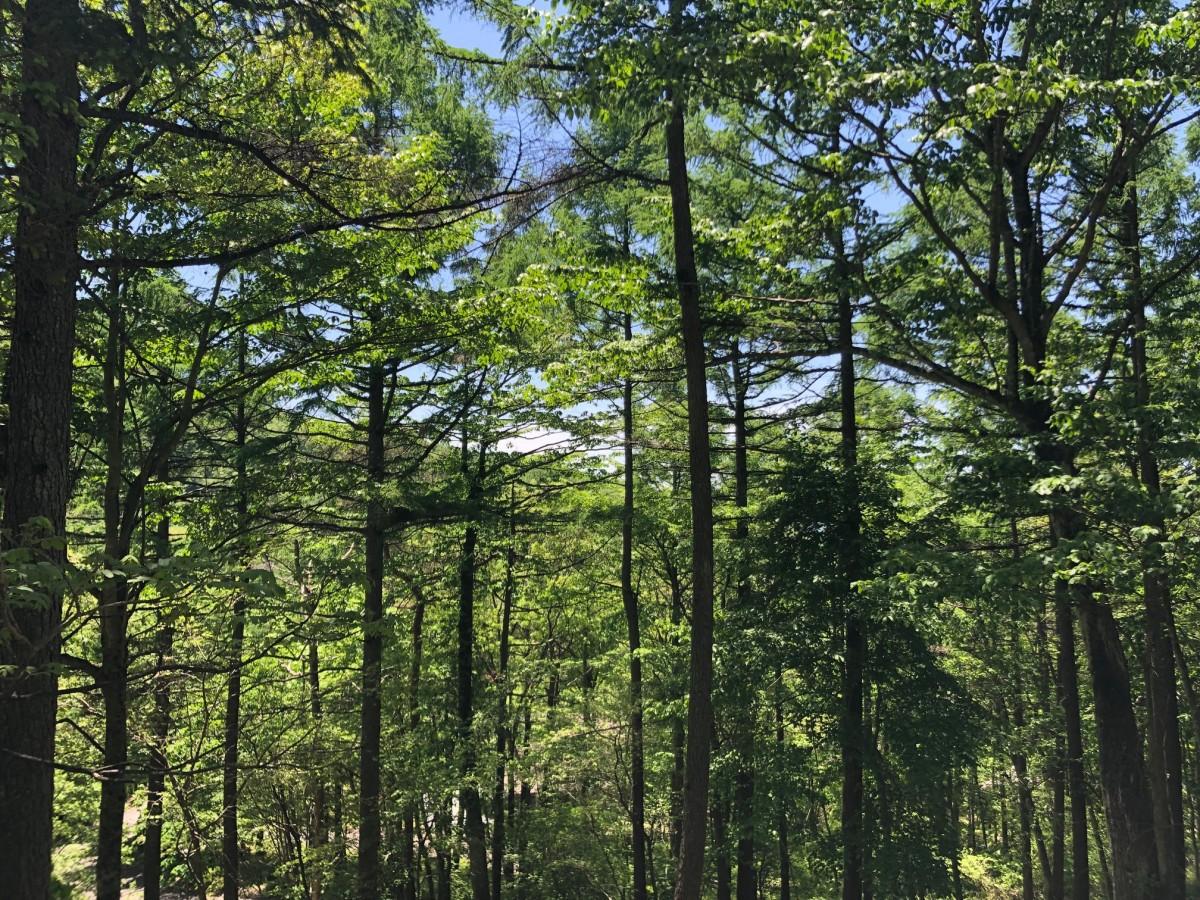 ブランシャールの森 区画28 - 8
