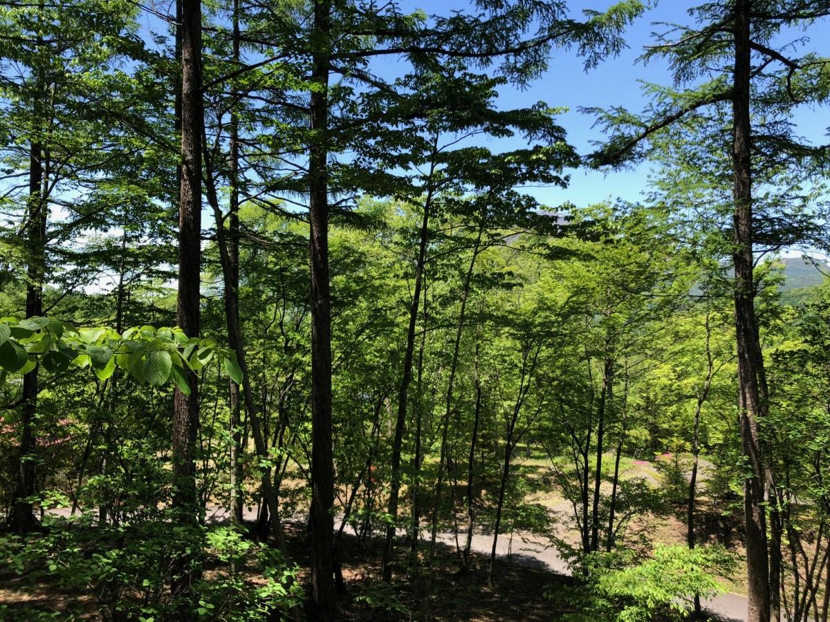 ブランシャールの森 区画7 - 7
