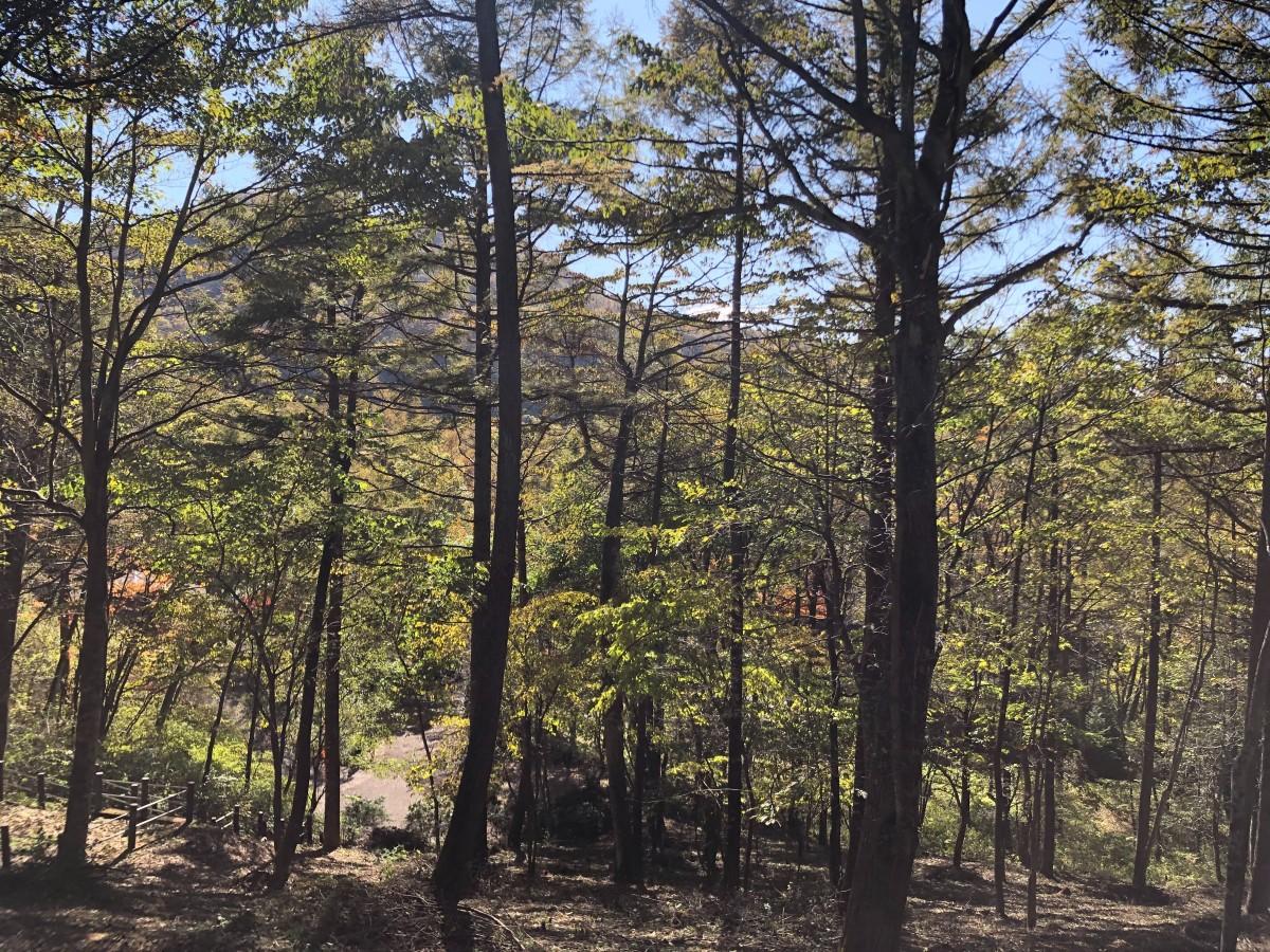 ブランシャールの森 区画28 - 3