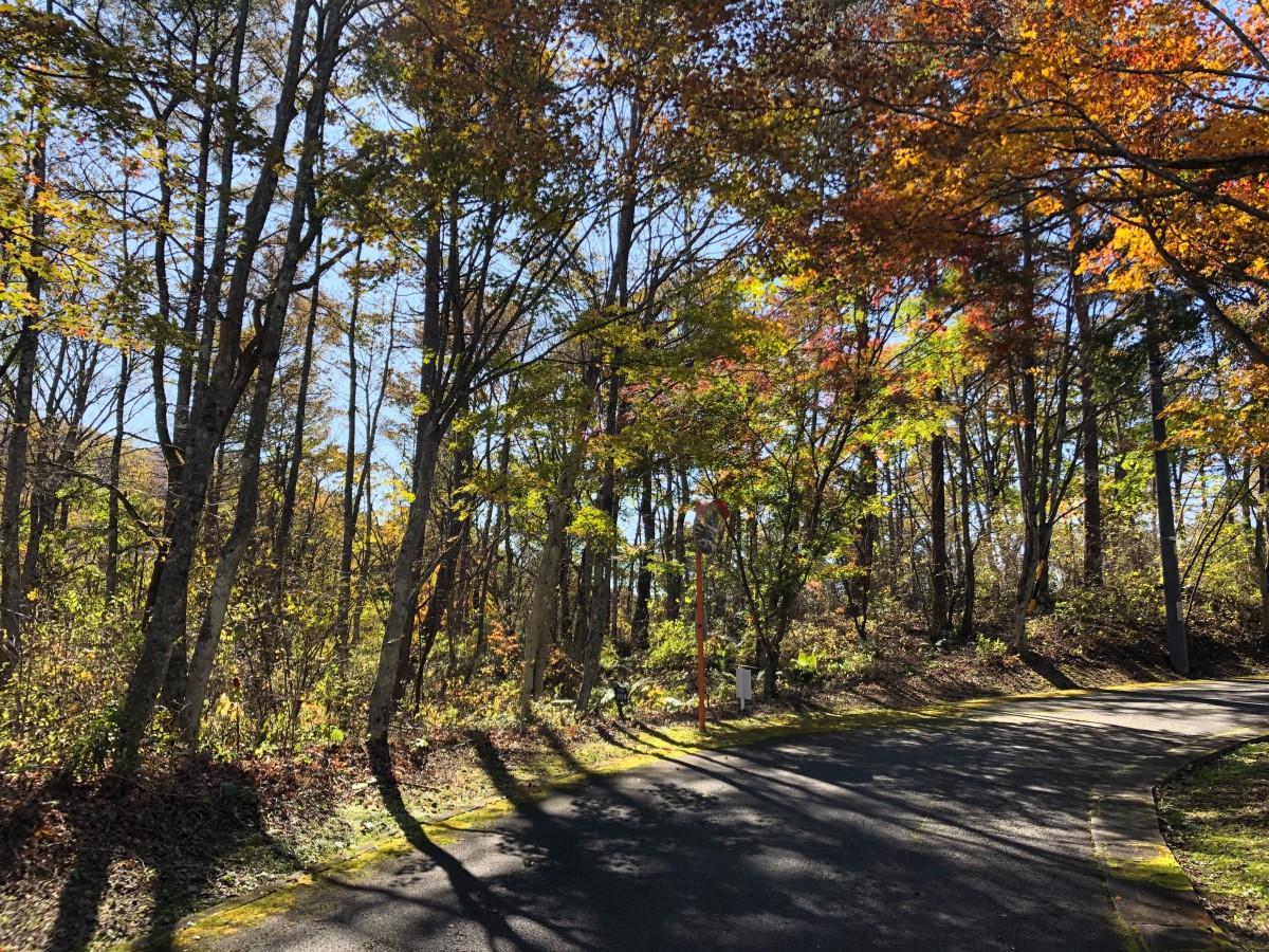 ブランシャールの森 区画21.22 離山を望む - 4
