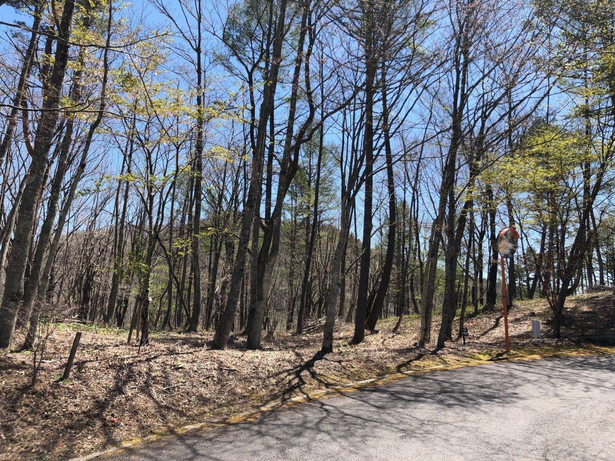 ブランシャールの森 区画21.22 離山を望む