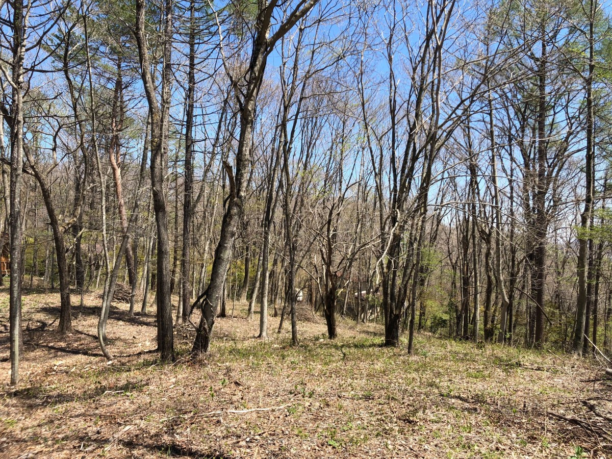 ブランシャールの森 区画21.22 離山を望む - 2