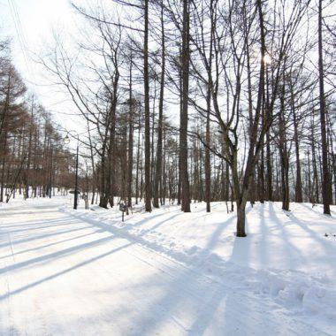 ブランシャールの森